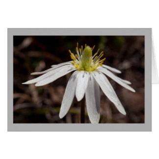 Cartão Flor alpina branca minúscula da flor 6