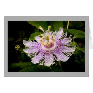 Cartão Flor da paixão da flor 14 com formigas apaixonado