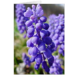 Cartão Flor do jacinto de uva