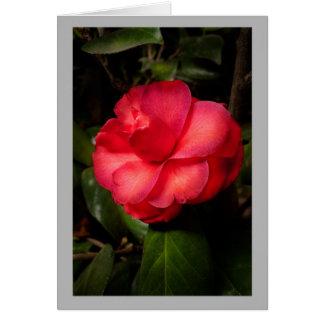 Cartão Flor do vermelho rico da camélia 6