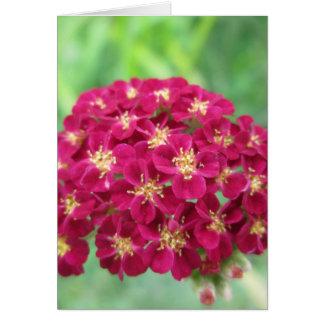 Cartão Flor do Yarrow do vermelho rico