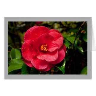 Cartão Flor e dewdrops vermelhos da camélia 8