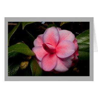 Cartão Flor vermelho escuro da camélia 13
