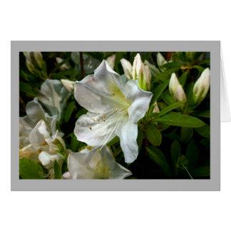 Cartão Flores & botões brancos da azálea 28
