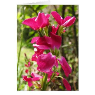 Cartão Flores conservadas em estoque vermelhas