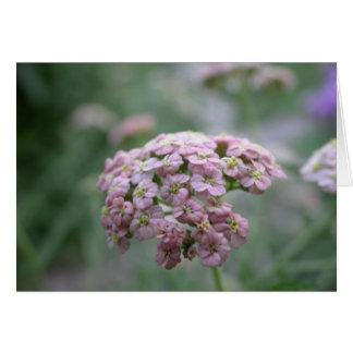 Cartão flores do verão - yarrow cor-de-rosa