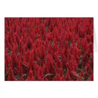 Cartão - flores vermelhas selvagens