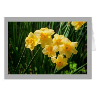 Cartão Floresce daffodils ensolarados do primavera 35a
