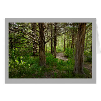 Cartão Floresta ensolarada da paisagem 7 com trajeto do
