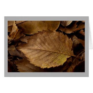 Cartão Folha marrom macia do outono no assoalho da