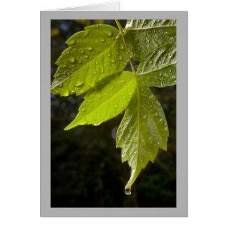 Cartão Folhas da primavera com gotas da chuva