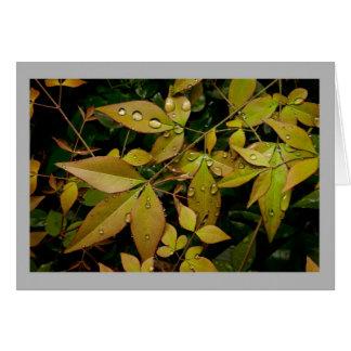 Cartão Folhas de Nandina da primavera com gotas da chuva