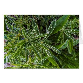 Cartão Folhas do verde com gotas de água