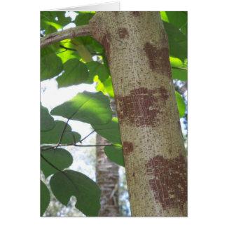 Cartão folhas do verde e tronco de árvore com latido