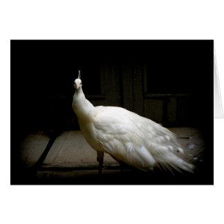 Cartão Foto branca elegante do pássaro da natureza do