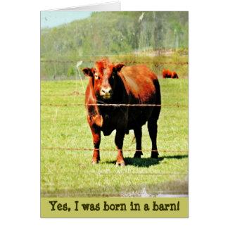 Cartão Foto da vaca