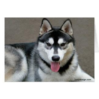 Cartão Fotografia do cão do Malamute do Alasca