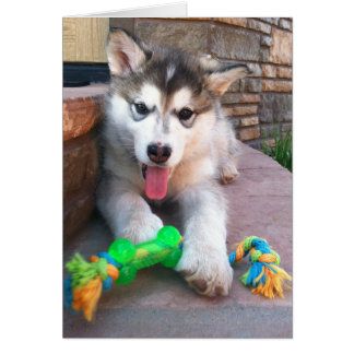 Cartão Fotografia do filhote de cachorro do Malamute do