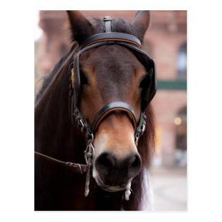 Cartão freado do cavalo