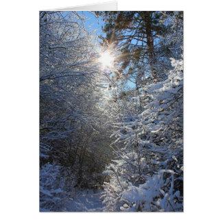 Cartão Frost cobriu árvores