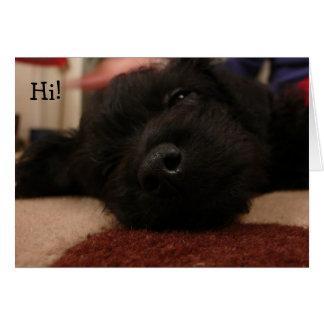 Cartão Funny Birthday Card with Dog