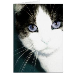Cartão Gatinho do Afiado-Olho