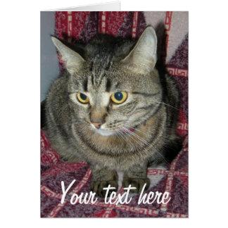 Cartão Gato