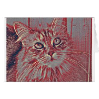 Cartão Gato de racum de Maine