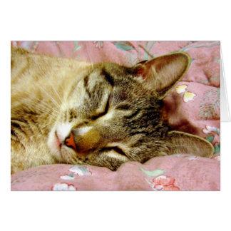 Cartão Gato do sono