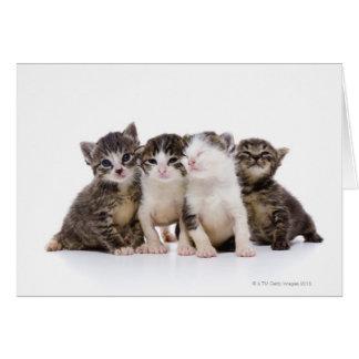 Cartão Gato japonês
