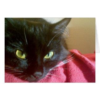 Cartão Gato preto da família