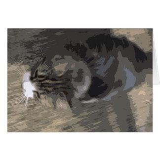 Cartão gato rápido