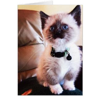 Cartão Gato Siamese alerta da fotografia | do gatinho