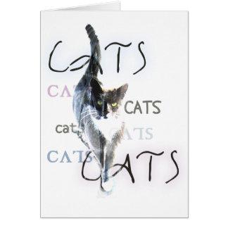 Cartão Gatos