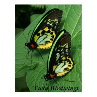 Cartão gêmeo da borboleta
