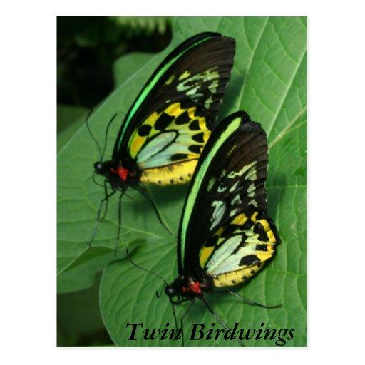 Cartão gêmeo da borboleta cartão postal