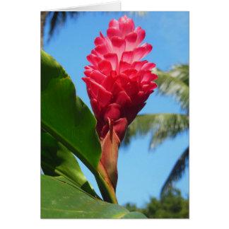 Cartão Gengibre havaiano