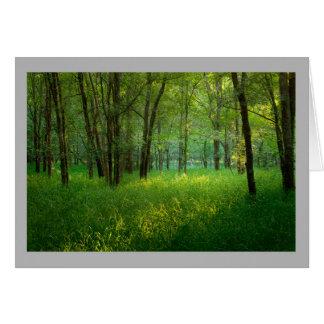 Cartão Grama ensolarada da floresta do primavera da