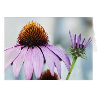 Cartão Harmonia floral