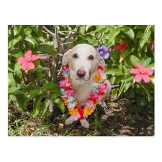 Cartão havaiano de Myrtie Cartão Postal