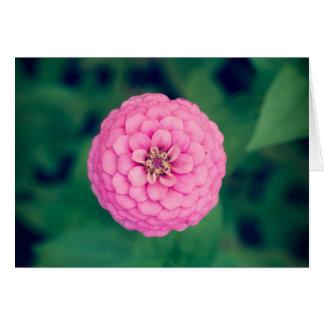 Cartão horizontal da flor cor-de-rosa do Zinnia