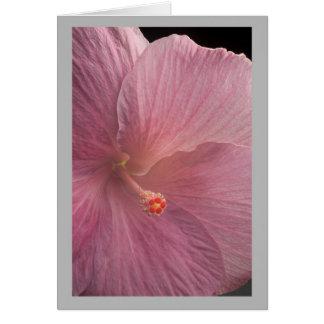 Cartão Hybiscus cor-de-rosa grande da flor 27