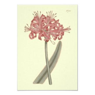 Cartão Ilustração botânica do Amaryllis com folhas