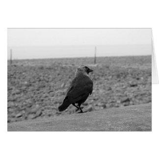 Cartão Imagem do pássaro. Jackdaw.