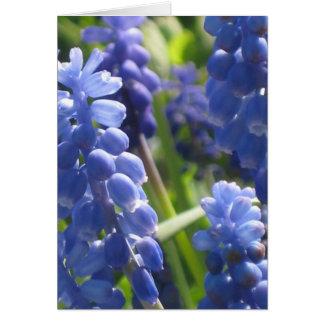 Cartão - jacinto de uva