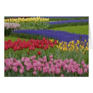 Cartão Jardim das tulipas, jacinto de uva e