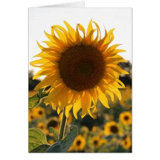 Cartão Jardim do girassol. Flores bonitas