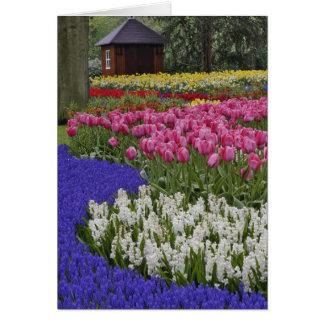 Cartão Jardim do jacinto de uva, do jacinto e das