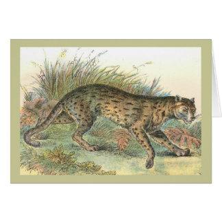 Cartão Javanensis do Felis do Leopardo-Gato (variedade de