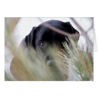 Cartão Labrador preto - através das árvores